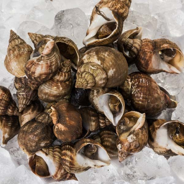 Whole Whelks from British waters sourced all year round